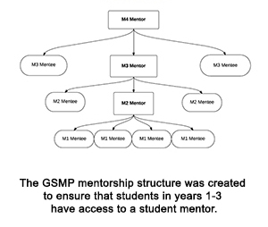 The GSMP mentorship structure was created to ensure that students in years 1-3 have access to a student mentor.