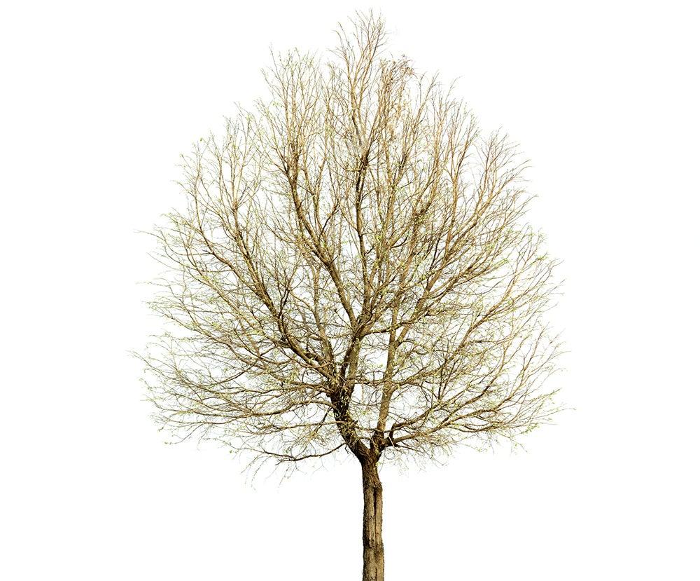 A tree image