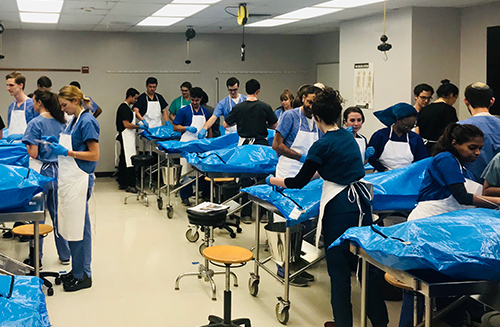 Groups of students in gross anatomy lab cluster around blue body bags containing cadavers