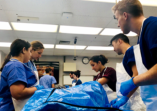 A small group of students looks down at a blue body bag
