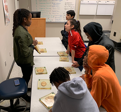 Students stand and sit at a table looking at cross sections of brains encased in plastic while a woman explains what they're seeing.