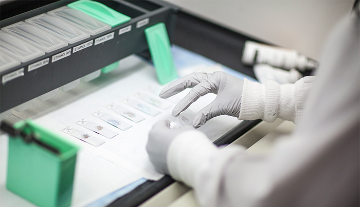 A worker sorts microscope slides on a machine