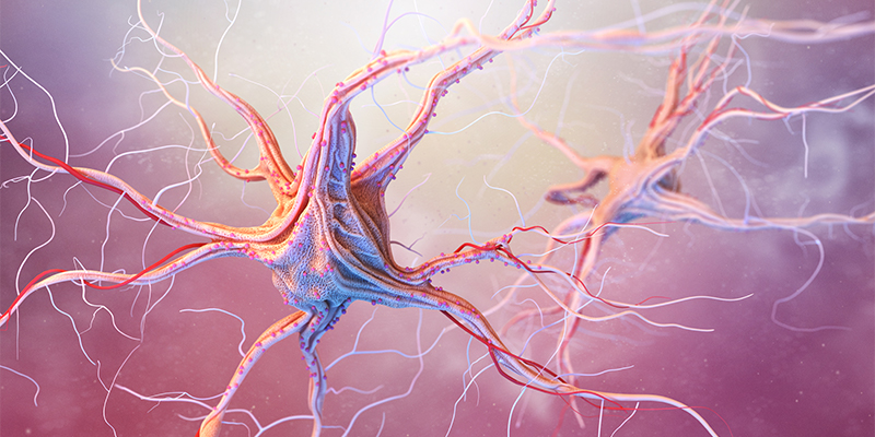 Photoillustration of a neuron