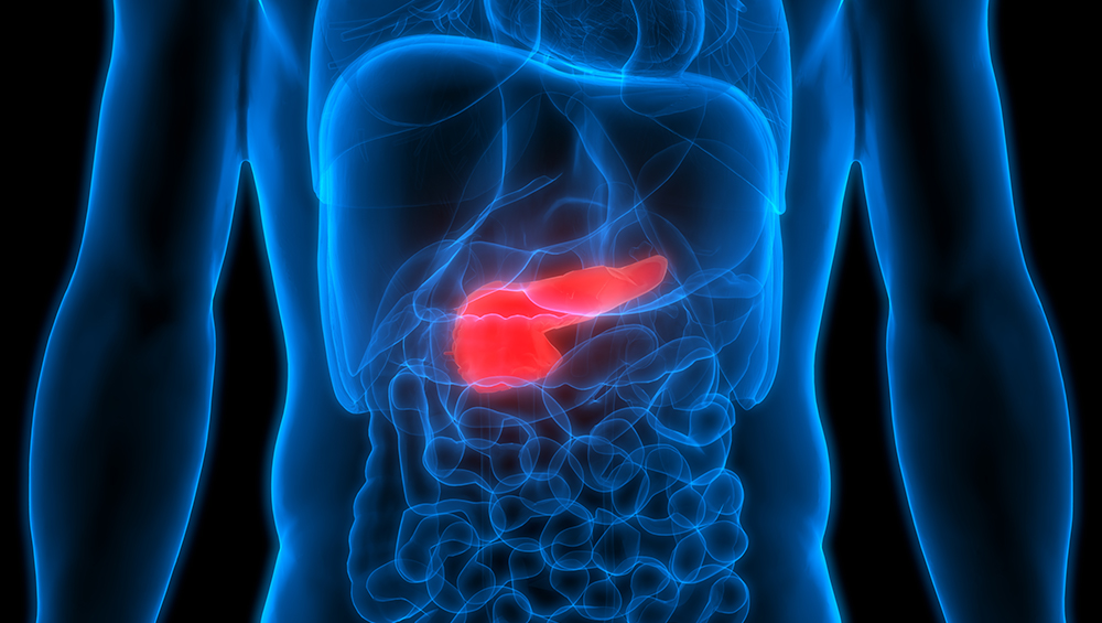 A photoillustration of the pancreas inside the body, with the pancreas shown in red in contrast to the blue outlines showing other major organs