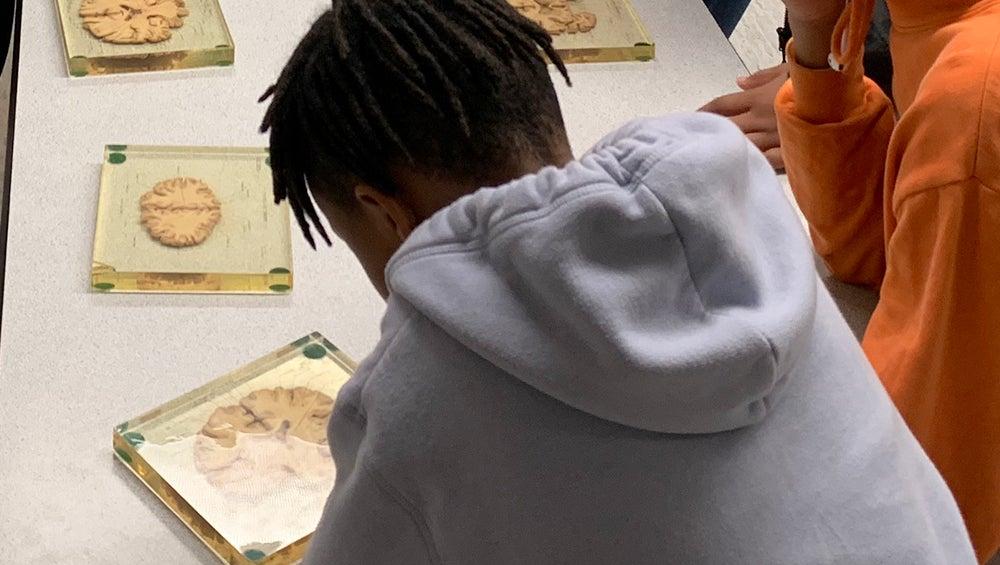 A boy looks at a slice of brain encased in plexiglas